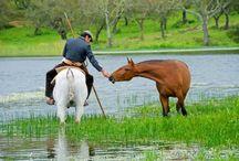 Cavalos   Caballos   Horses