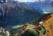 Neuseeland / Aotearoa...Eines Tages werde ich es sehen......mein absoluter Traum.