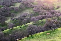 Pacheco State Park / by CA State Parks