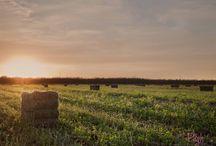 Alfalfa and Hay