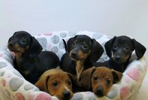 Puppies September 2015 / Puppies we have had during the month of September in the year 2015