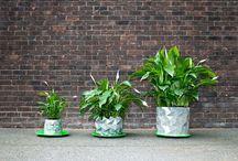 Urban Garden {original pot ideas}