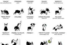 Dogs ~ Information / Bits & Bobs