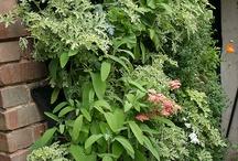 Gardening tips / Useful gardening tips
