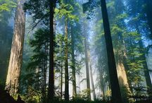 Nature: Trees / We love nature, but this is all about the trees. The reason we people are able to breathe! Huntington Toyota Scion is sharing the love of all that grows from the ground. To join just follow this or another one of our boards / find the REQUEST BOARD in our profile and leave a message, or email toyotaofhuntington@gmail.com or message us on Facebook  https://www.facebook.com/HuntingtonToyotaScion your pinterest URL!