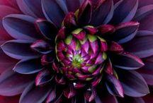 Stunning Flowers & Gardens
