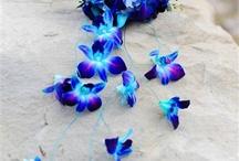 Flowers / by Lisa M