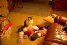 Keyifli Kediler / Mutlu Kediler