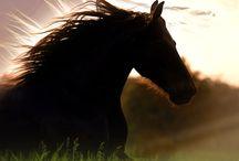 Horses 2 / by Deborah Manning