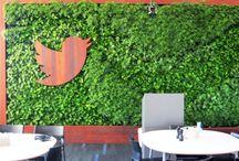zieleń w biurze / green offices / zieleń w biurze, rośliny do wnętrz, zielone ściany