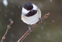 Birds at my feeder / by Melissa Price