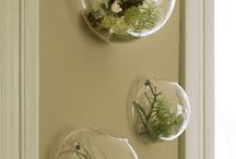 Air Plants and Water Plants / Plants