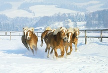 Horses / by Terri Birdwell Jones