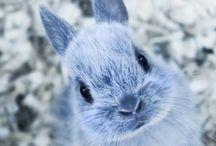 Cute rabbits ♥
