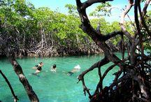 La Isla Del Encanto- Puerto Rico