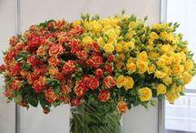 Москва выставка Цветы Flowers-IPM 2013
