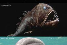 Animals Weird and Beautiful