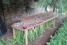 Farm - veggies