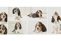 Puppy Pics / by Ali Hohn
