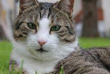 Katzenkot