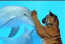 Animals with animals :-)