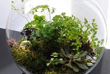 terrarium / terrarium / by Maricel Thompson