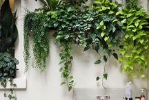parete di piante_ interni