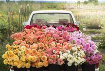 flowers/plants ❤️