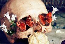 Floralement parlant / Un univers qui bloom et qui fait boum