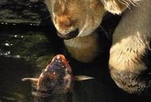 Animal n friends...