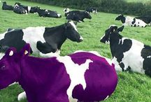 PurpleBiz Introduction / Introducing PurpleBiz International Business directory