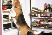 Susanne / Beagles