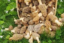 mushroom propagation