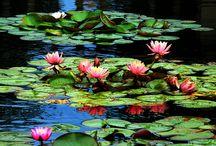 Relax / Buddha , lotus
