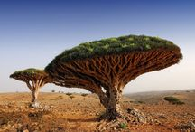 Socotra / This is place dedicated to Socotra amazing island