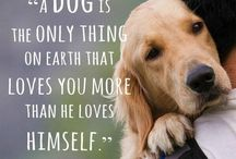doggie! ❤
