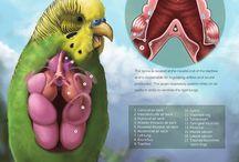 avian veterinary