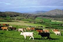 Goleen, Ireland / by Uma Vivi