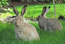 RABBIT / Cool bunnies, scary bunnies, bunny art, vintage 19th century & 1920's Art Deco bunny easter cards, primitive bunny art, bunny objects