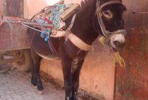 My maroc