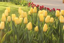 Tulip Time 2014 / Get out your Cosby sweater for 2014!  / by Holland Michigan