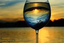 vinhos wines