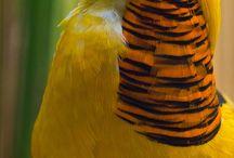 Birds / by Michele Earnhart