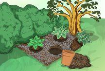Hostas / Outdoor gardening