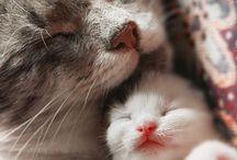 Kitties / by Alex Adams