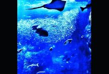 えのすいの相模大水槽です。 ラッセン風。笑 Cheristian Lassen style ;) #aquarium #tropicalfish #enosui #shonan #enoshima #lassenstyle #えのすい #新江ノ島水族館 #湘南 #江ノ島 #ラッセン風 #盛り過ぎ写真