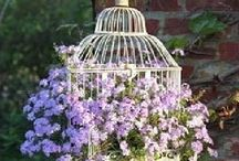 bird cages / not for birds