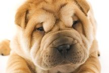 i love the sharpei