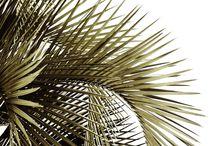 Beach House / Interior design, home decor, minimalism, home trends,