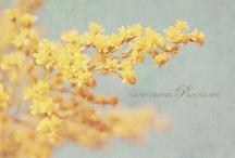Pretty Photos / by Sasha Lane